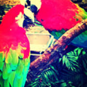 Parrot Couple Poster
