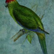Parrot Fashion Poster