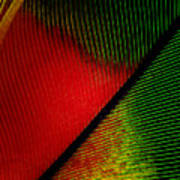 Parrot Feather Macro Poster