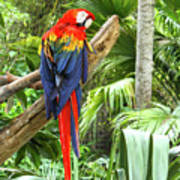 Parrot In Tropical Setting Poster