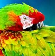 Parrot Time 1 Poster