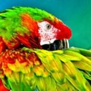 Parrot Time 2 Poster