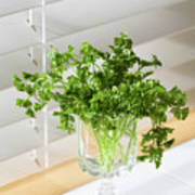 Parsley Bouquet Poster
