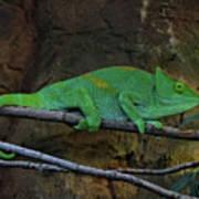 Parson's Chameleon Poster