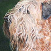 Pascal, Soft Coated Wheaten Terrier Poster