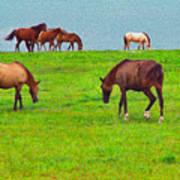 Paso Fino Horses Graze By Seaside Poster