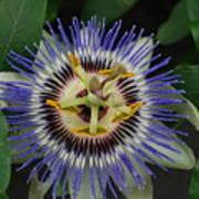 Passion Bloom Vi Poster