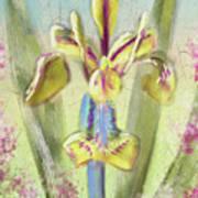 Pastel Iris Poster