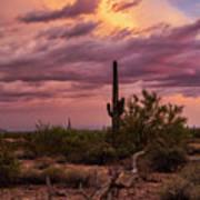 Pastel Sonoran Skies At Sunset  Poster