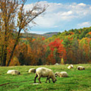Pasture - New England Fall Landscape Sheep Poster