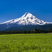 Pasture View Of Mt. Hood Poster