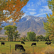 Pasture With A View Poster