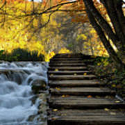 Path In Plitvice Poster