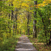 Path In The Woods During Fall Leaf Season Poster