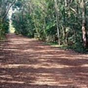 Path Into The Jungle Poster