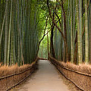 Path Through A Bamboo Grove In Kyoto Poster