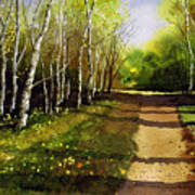 Path Through Silver Birches Poster