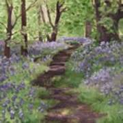 Path Through The Bluebells Poster