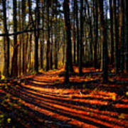 Path To Serenity - Nickerson State Park Poster