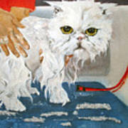 Pathetic Persian Gets A Bath Poster