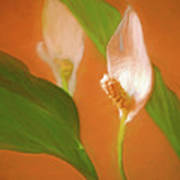 Peace Lily Grace 10 Poster