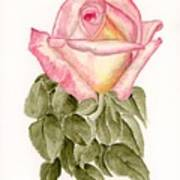 Peace Rosebud Poster