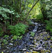 Peaceful Flowing Creek Poster