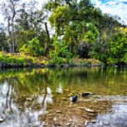 Peaceful Morning On Cibolo Creek Poster