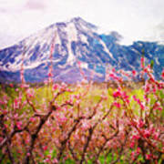 Peach Blossoms And Mount Lamborn II Poster