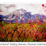 Peach Blossoms And Mount Lamborn Orchard Valley Farms Poster