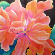 Peach Double Hibiscus Poster
