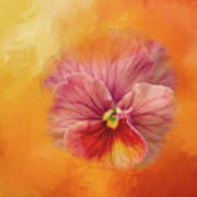 Peach Pansy Poster