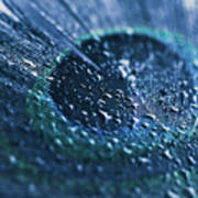 Peacock Feather Macro Waterdrops Poster
