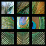 Peacock Feather Mosaic Poster