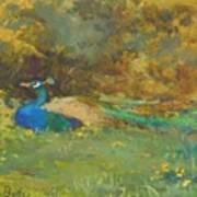Peacock In A Garden Poster