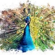 Peacock Watercolor Painting Poster