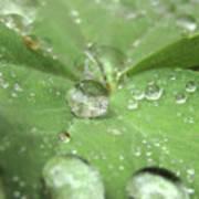 Pearls On Leaf Poster