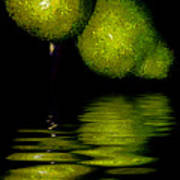 Pears And Its Reflection Poster