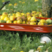 Pears In A Wagon Poster by Gordon Wood