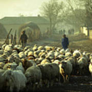 Peasants And Herd On The Village Path Poster