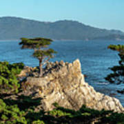 Pebble Beach Iconic Tree With Sun Light At Dusk Poster
