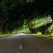 Pecan Alley Rays - Arkansas - Landscape Poster