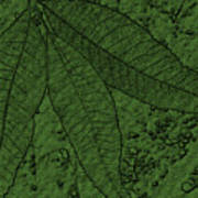 Pecan Tree Leaves Poster