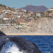 Pedregal - Cabo San Lucas Poster