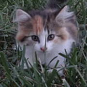 Peek A Boo Kitty Poster