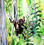 Peek A Boo Moose Poster