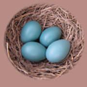 Peek Into A Robin's Nest Poster