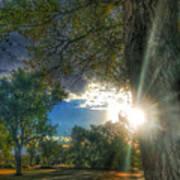 Peekaboo Tree Poster