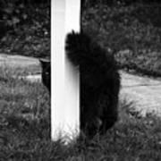 Peeking Kitty Black And White Poster