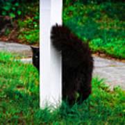 Peeking Kitty Poster